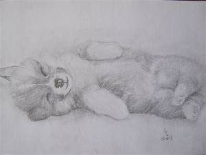 Puppy pencil drawing by Pieceofrope on DeviantArt