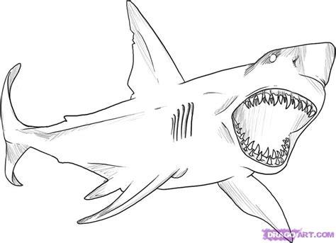 step    draw  great white shark