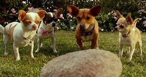 Beverly Hills Chihuahua 3 Official Movie Clip Pee Mail ...