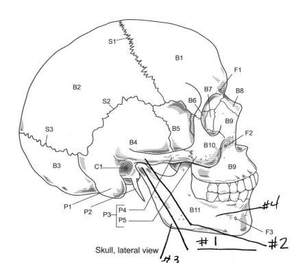 13 best images of printable skeleton worksheets skull