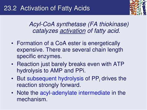 Chapter 23 Fatty Acid Catabolism Powerpoint