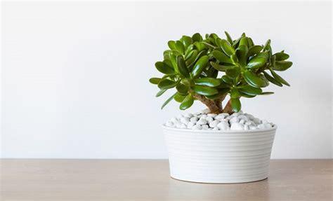 Plantas: Veja como Levar a Natureza para Dentro de Sua Casa