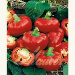 Paprika Pflanzen Abstand : samen saatgut paprika tomatenpaprika 39 pritavit 39 capsicum annuum samen ~ Whattoseeinmadrid.com Haus und Dekorationen
