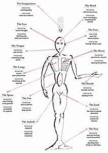 Male Body Parts Name
