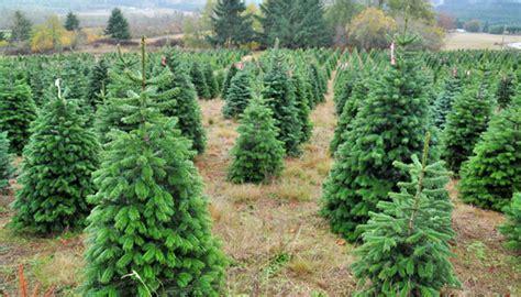 bio weihnachtsb 228 ume kaufen in der schweiz