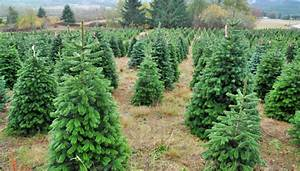 Künstliche Weihnachtsbäume Kaufen : bio weihnachtsb ume kaufen in der schweiz ~ Indierocktalk.com Haus und Dekorationen