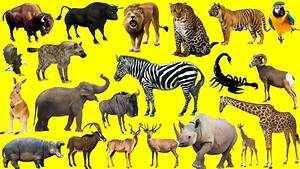 Learn Wild Animals NEW | African Animals For Kids - Fun ...