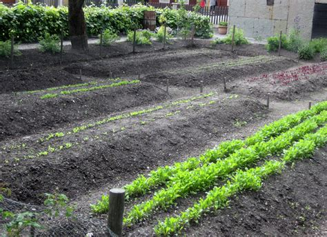 planting a garden better for planting square foot gardening vs row