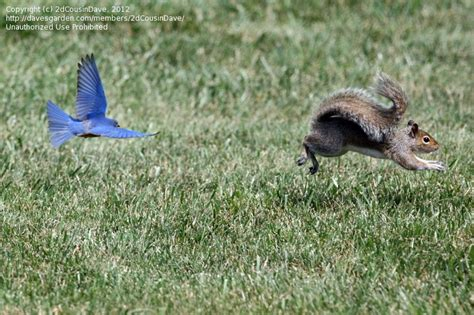 bird watching do squirrels eat safflower seeds 1 by