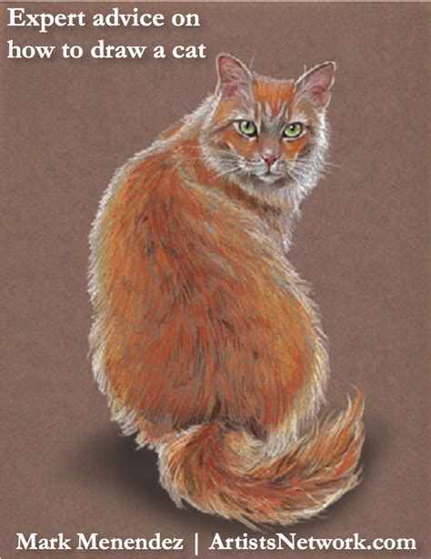 draw  perfect cat   easy colored pencil tips