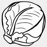 Cabbage Clipart Coloring Broccoli Lettuce Transparent Colouring Repolyo Tags sketch template