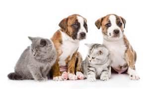 le chauffante pour chiot eleveur particulier refuge bien choisir chien ou chat dossiers chien sant 233 vet