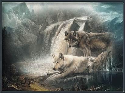 Loup Loups Centerblog Belles American Gifs Wolves