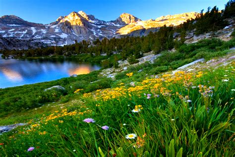 Daisies On Mountainside In Spring Full Hd Wallpaper And