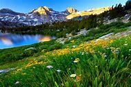 Desktop Spring Flowers Mountains