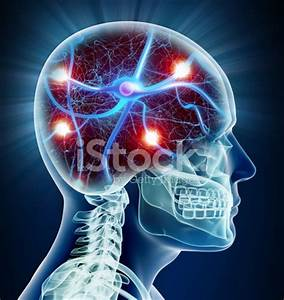 Brain X Ray With Neurons stock photos - FreeImages.com