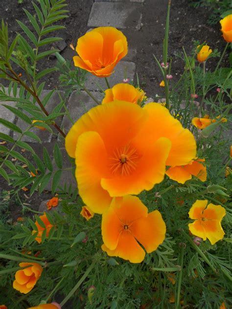 advantage anticyclone botanics stories