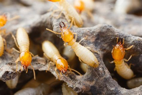 Ideas For New Kitchen - know the signs of termite damage in your home my decorative