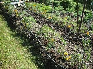 Comment Tuteurer Les Tomates : plantation tomates palissage sur fil tuteur le ~ Melissatoandfro.com Idées de Décoration