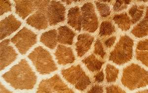 Real Animal Skin Textures in High Definition