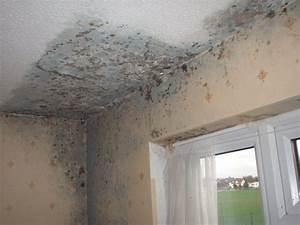Surveying Property  Damp In Buildings  U2013 Part 1
