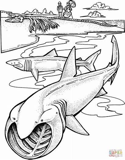 Shark Coloring Sharks Pages Basking Printable Drawing