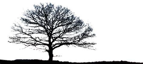 black trees secret corners