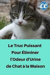 Odeur Urine Chat : le truc puissant pour liminer l 39 odeur d 39 urine de chat la maison astuces pour chiens ~ Maxctalentgroup.com Avis de Voitures