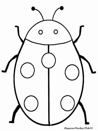 Gambar Coloring Insect Mewarnai Serangga Bug Realistic