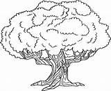 Coloring Tree Drzewo Oak Kolorowania Printable Drawings Environment Kolorowanka Sheets sketch template