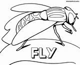 Fly Coloring Pages Nature sketch template