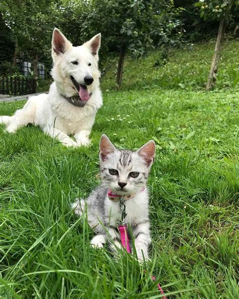 cats dogs better than dog cat why pets reasons kittens thesprucepets loud meowing animals spruce introduce living puppies purring