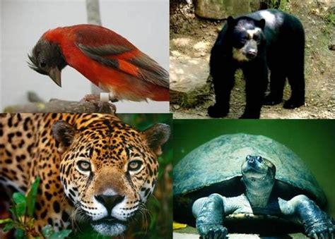 Clasificación Característica De Los Seres Vivos Animales