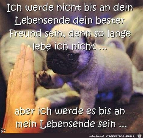 Glueckliche Haustiere Was Hunde Brauchen by Pin Martina Kijek Auf Hund Spr 252 Che Tiere