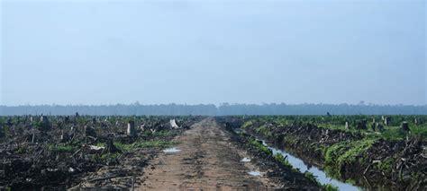tropical deforestation  global warming union