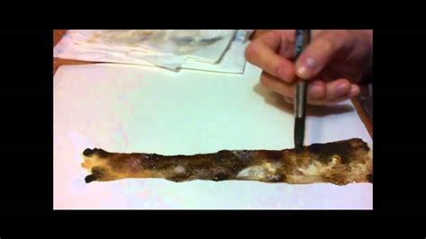 acquerello  dipingere lalbero tecnica del gesso