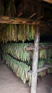 Tobacco Barn ... I remember hours of working in tobacco ...