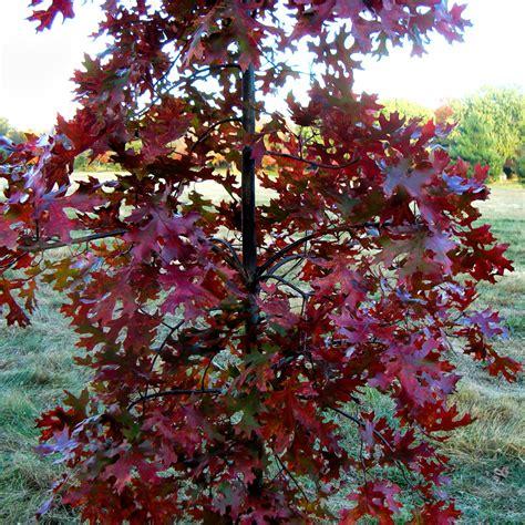 oaks galore finke gardens nursery