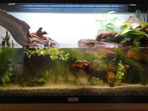 elevage de grenouille en aquarium am 233 nagement aquarium pour cynops pyrrhogaster finalement pour tylototriton verrucosus