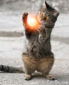 magic cat like what s up ya sieve