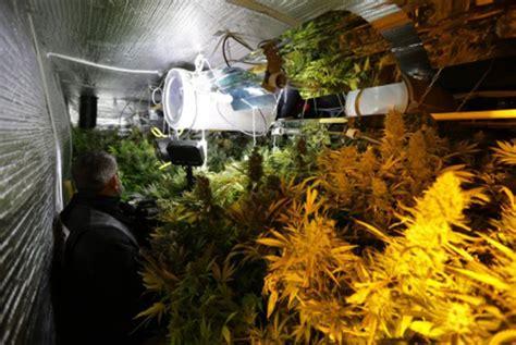 chambre culture cannabis complete chambre de culture complete cannabis cultiver