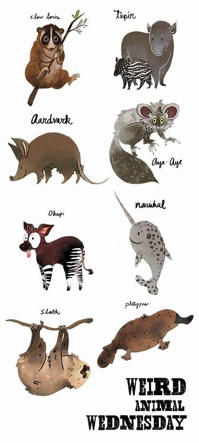 Animal Weird Wednesday Sketch Teacher