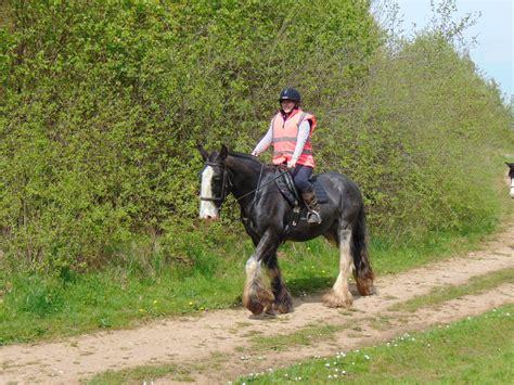 trekking derbyshire pony horse riding road