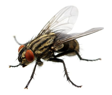 Wasp & Flying Insect Control Cid Pest Control Se London & Kent