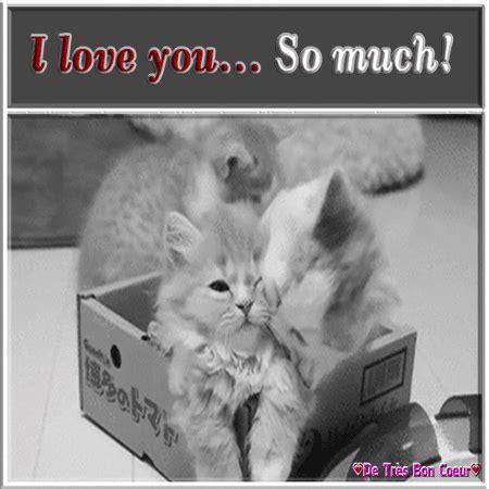 kitten showing  love   love  ecards