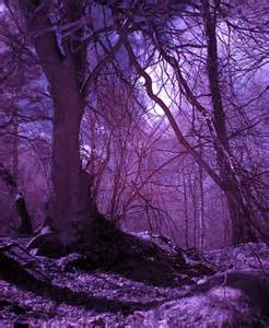 Purple Colorful Forest