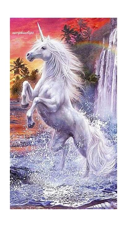 Unicorn Unicorns Pegasus Gifs Fantasy Creatures Mystical