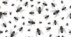 Comment Chasser Les Mouches : invasion mouche maison hiver ventana blog ~ Melissatoandfro.com Idées de Décoration