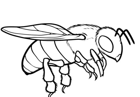 bee realistic coloring pages print coloring