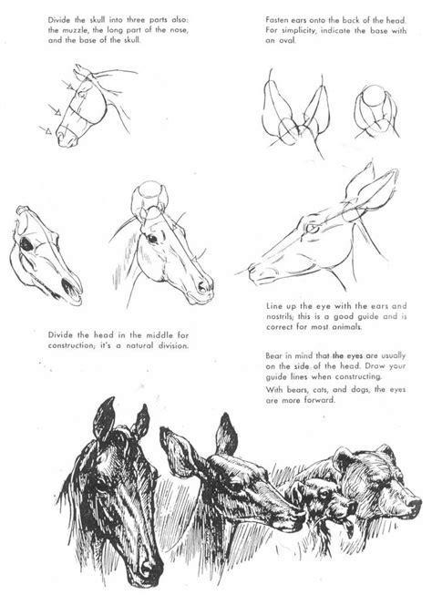 book  art  animal drawing  ken hultgren book